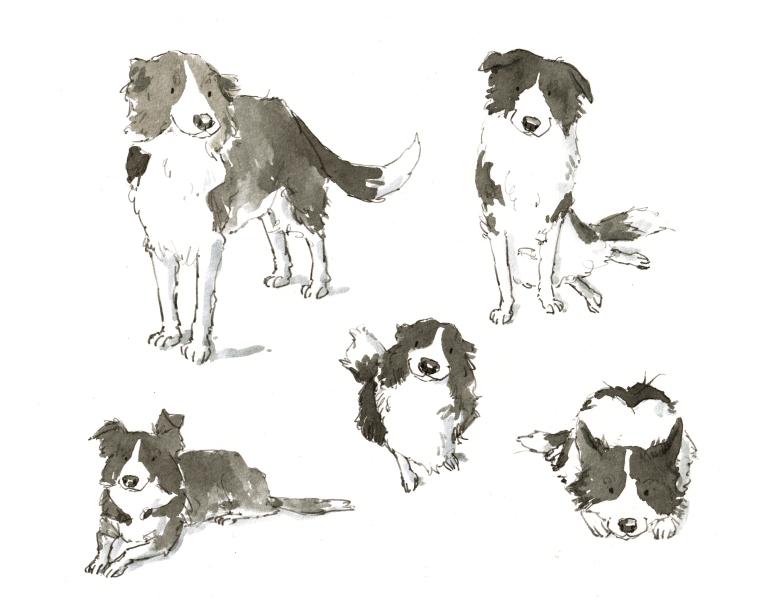 dog_20190620_0001