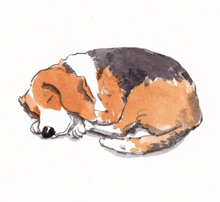 dog_20190704_0002