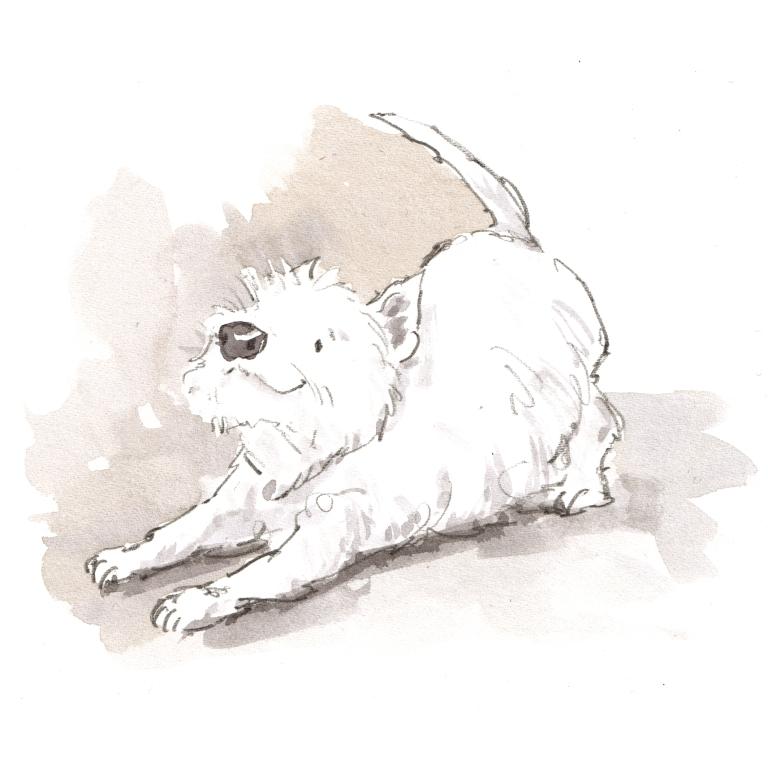 dog_20190705_0001