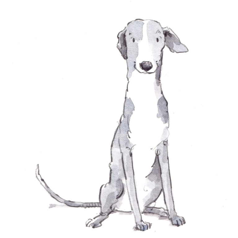 dog_20190713_0003