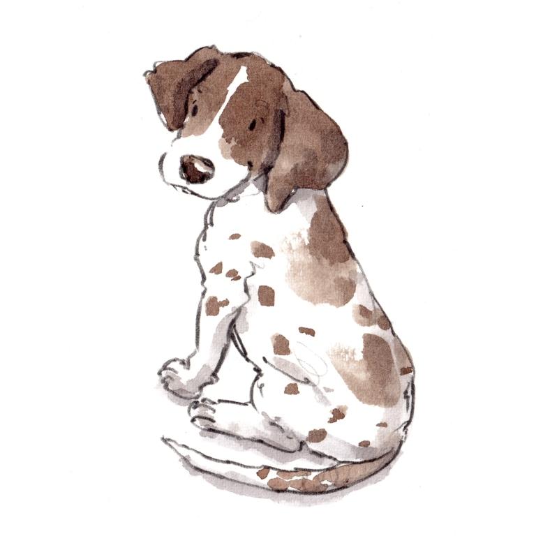 dog_20190714_0001
