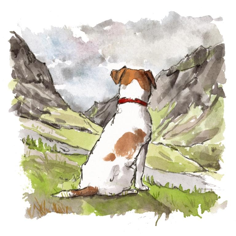 dog_20190715_0002
