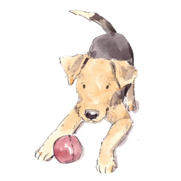 dog_20190728_0001