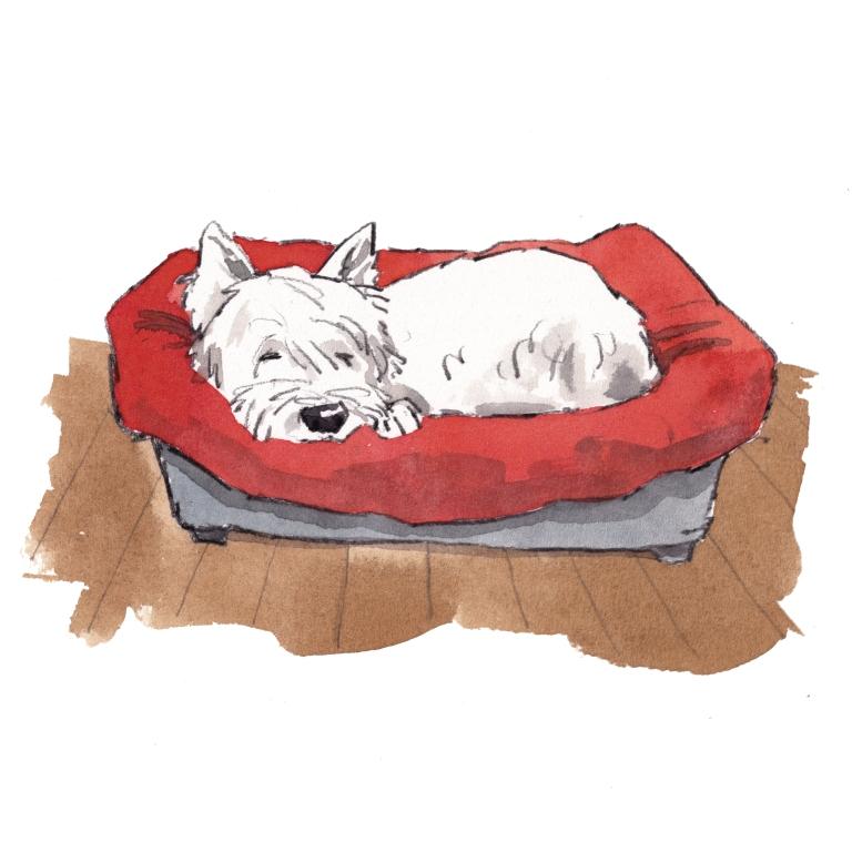 dog_20190809_0006
