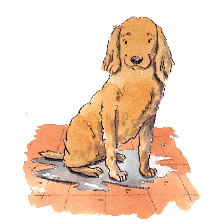dog_20190810_0003