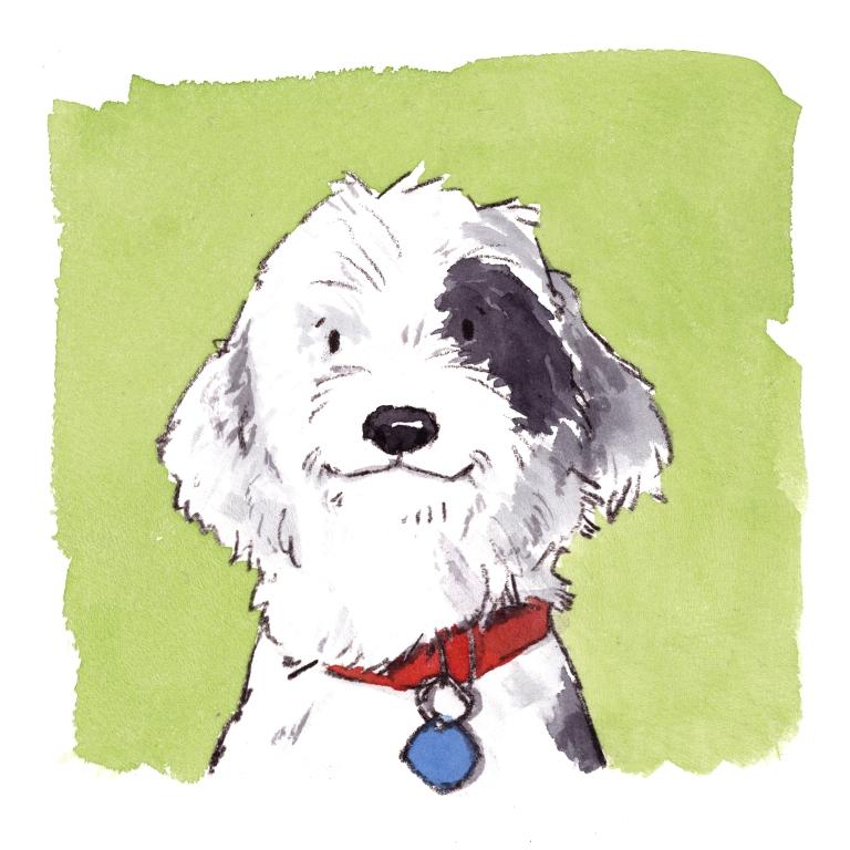 dog_20190819_0002