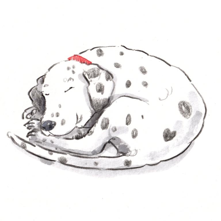 dog_20190928_0001