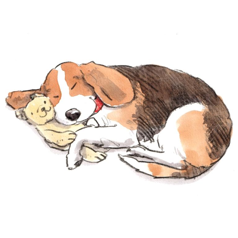 dog_20191001_0003