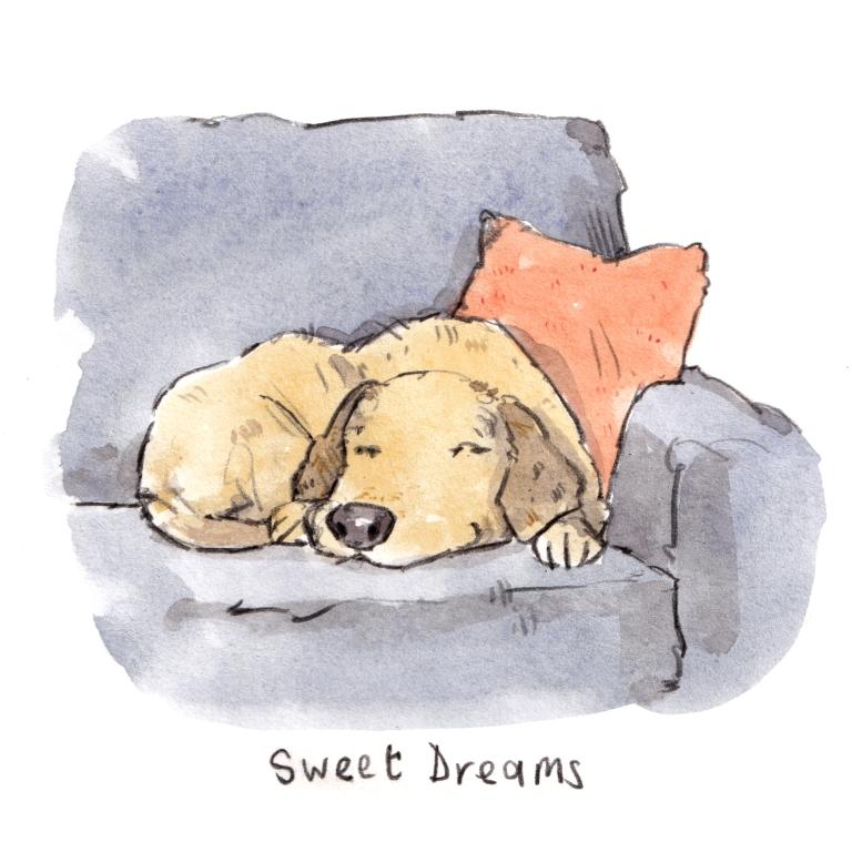 dog_20191020_0003