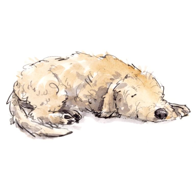 dog_20191022_0002