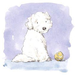 dog_20191123_0005 small