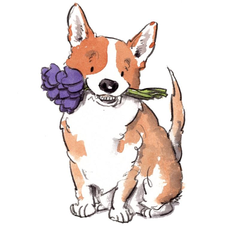 dog_20191227_0003