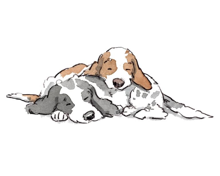 dog_20200126_0003
