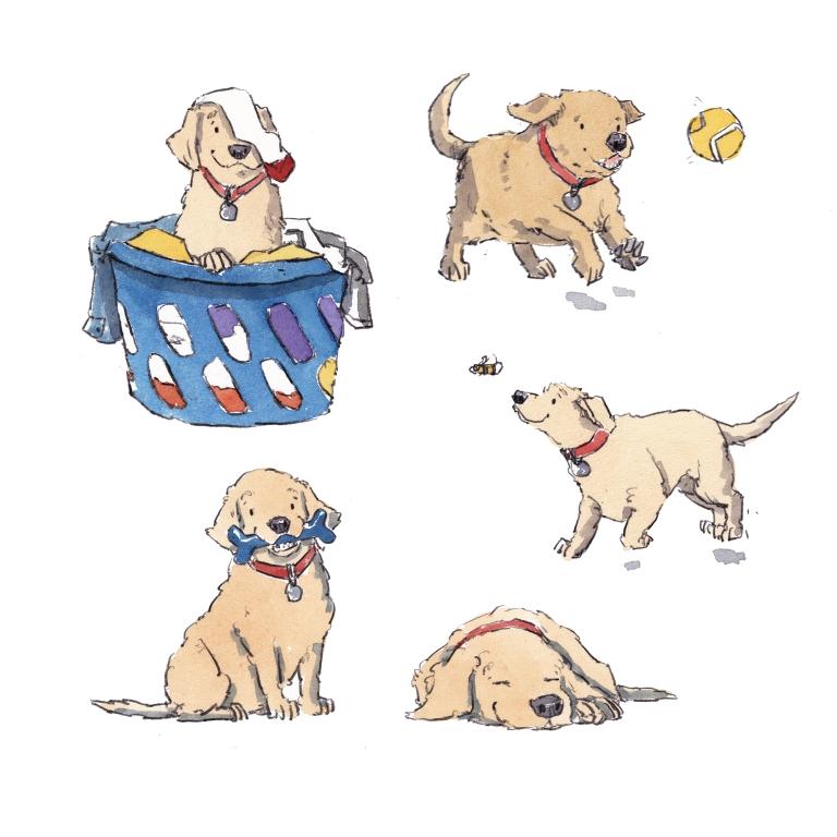 dog_20200201_0001small