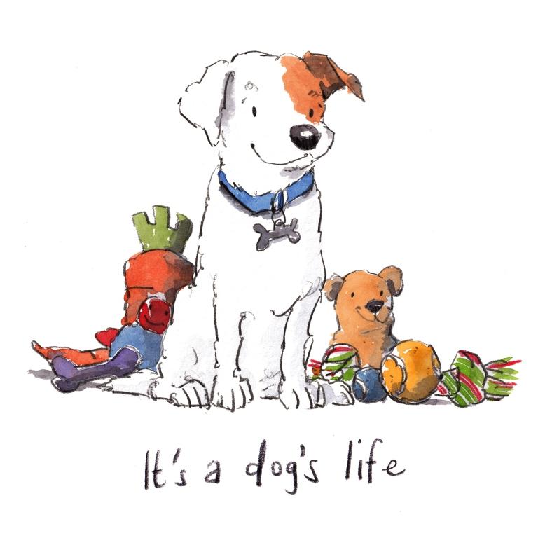 dog_20200219_0004small